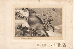 CHEERY GREETINGS, A CHRISTMAS CAROL robin perched on holly facing front looking up