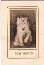BEST WISHES cat wearing bell on collar looks upwards