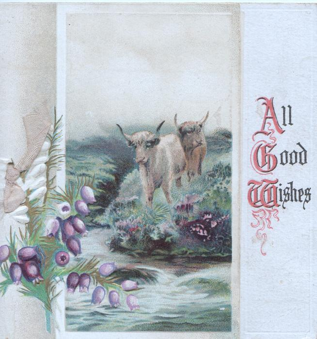 ALL GOOD WISHES(A,G&W illuminated) right, white & purple heather left, highland cattle across stream