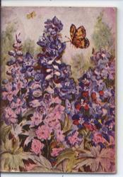 butterfly approaches pink and purple flowers