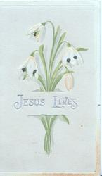 JESUS LIVES in silver across bunch of snowdrops