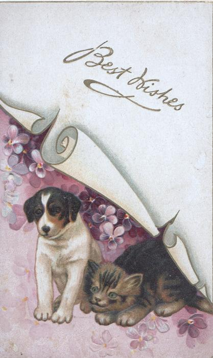BEST WISHES in gilt on white scroll over puppy & kitten among violets