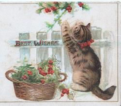 BEST WISHES in red on palisade fence, kitten picks holly