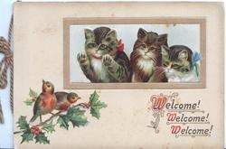 WELCOME! WELCOME! WELCOME!(W's ILLUMINATED) below inset of 3 kittens looking through window at English robins on holly
