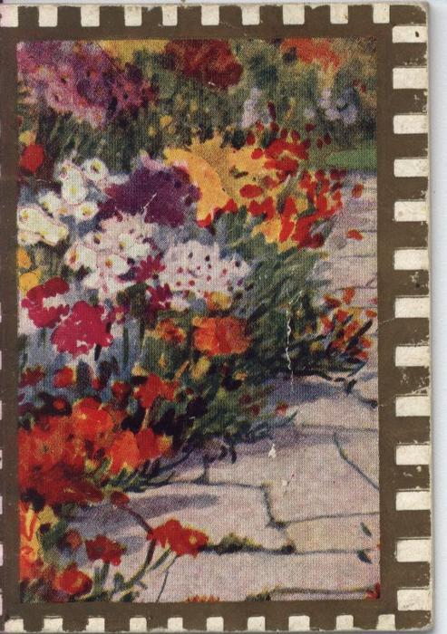 flowers in garden beside stone walkway