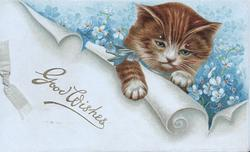 GOOD WISHES in gilt on scroll below kitten among blue forget-me-nots