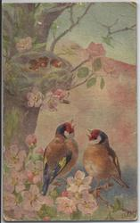 LULLABY (title on reverse) two birds on blossom branch under nest containing three young birds