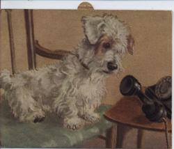 white terrier dog peers into telephone