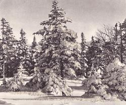 no front title, many snowy evergreens, glitter