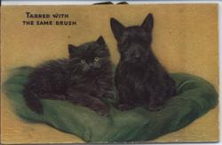 TARRED WITH THE SAME BRUSH black cat and black scotch terrier on a green cushion