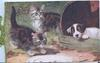 two kittens, a plate and a dog looking out of a barrel, inside CHRISTMAS GREETINGS