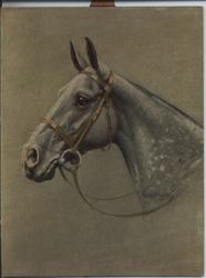 THE GREY MARE (title on reverse)