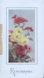 REMEMBRANCE in blue, multicoloured chrysanthemums in oblong inset