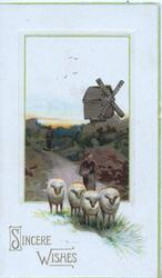 SINCERE WISHES in gilt below  inset rural scene, 4 sheep driven front, windmill at back