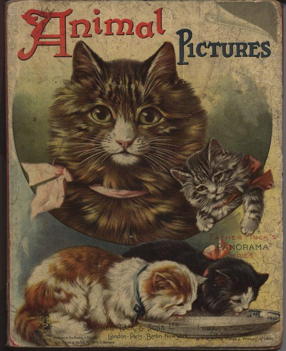 ANIMAL PICTURES cats