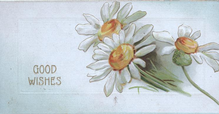 GOOD WISHES in gilt  left, 3 white daisies with yellow centres
