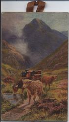 A MOUNTAIN PASS (title on reverse) highland cattle