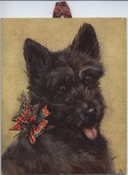 JAUNTY JOCK (title on reverse) scotch terrier
