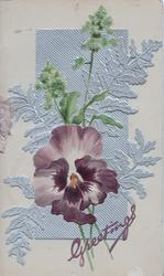 GREETINGS in purple below white & purple pansy, below mignonette in front of silver design