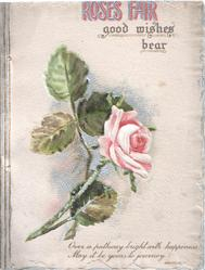 ROSES FAIR GOOD WISHES BEAR above single pink rose
