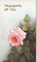 THOUGHTS OF YOU in gilt above single pink rose & leaves, white/brown background