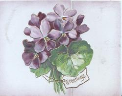 GREETINGS in gilt on small white plaque below violets & leaves