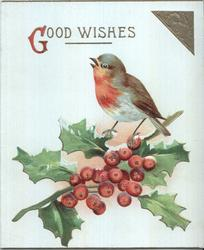GOOD WISHES (G illuminated) robin perching on single holly branch