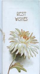 BEST WISHES in gilt above orange tinged white chrysanthemum