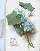 LEST WE FORGET below ivy & forget-me-nots