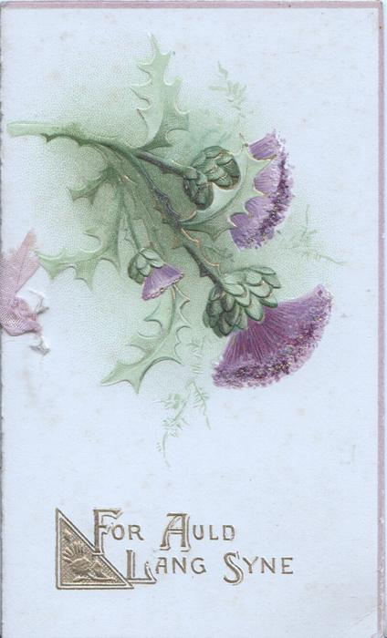 FOR AULD LANG SYNE in gilt below purple thistles