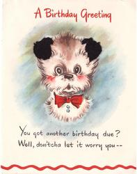 A BIRTHDAY GREETING white dog wearing red bowtie faces front