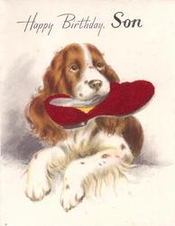 HAPPY BIRTHDAY, SON spaniel holds slipper in mouth, slipper has red fuzzy applique