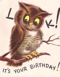 LOOK! IT'S YOUR BIRTHDAY! owl with perforated eyes ('O's' in the word look)