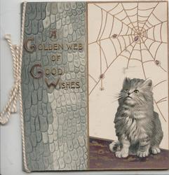 A GOLDEN WEB OF GOOD WISHES in gilt on grey embossed  design left, kitten looks up at spider spinning web