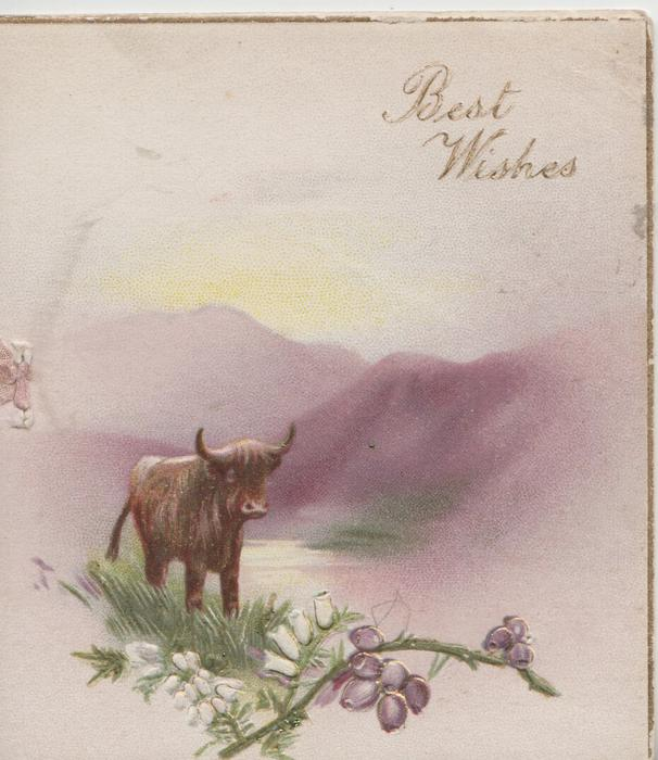 BEST WISHES in gilt above hills & lochs, highland cow standing in water above sprigs of heather