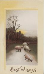 BEST WISHES below evening rural scene, 4 sheep on road