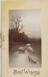 BEST WISHES below evening rural scene, 4 sheep on road
