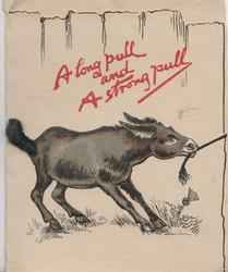 A LONG PULL AND A STRONG PULL  in red, donkey pulls hard on rope