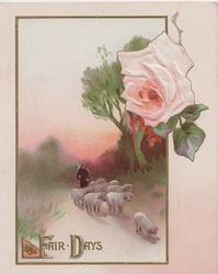 FAIR DAYS in gilt below sheep driven front, pink rose above right
