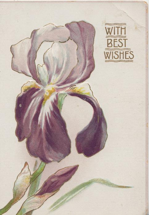WITH BEST WISHES in gilt above right, purple iris & bud