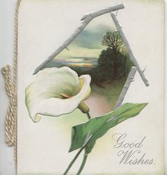 GOOD WISHES in silver, irregular thorny silver bordered evening rural inset, calla lily front left