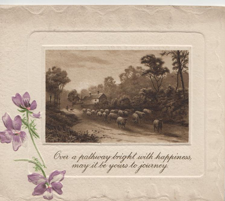 quote OVER A PATHWAY.....rural inset cows driven front on country road, farm behind 3 purple pansies left