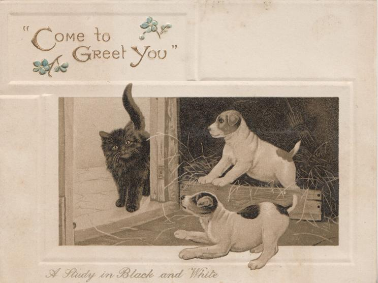 """COME TO GREET YOU"" 2 white & brown puppies bark at black kitten coming through door"