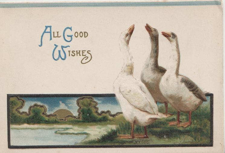 ALL GOOD WISHES (A,G &W in blue) 3 white/grey geese stand with heads held high, watery rural background