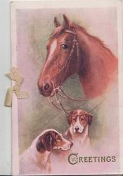 GREETINGS below brown horse, two dogs, pink background