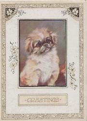 GREETINGS in plaque below pekinese dog in oblong inset sitting looking up & right/front, marginal design