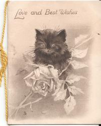 LOVE AND BEST WISHES black kitten sits on rose