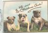 WHO SAID NO CHRISTMAS CARDS! 3 bulldogs lie on grass looking front