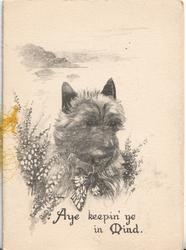 AYE KEEPIN' YE IN MIND, black & white study of scottie in heather, Scotch background