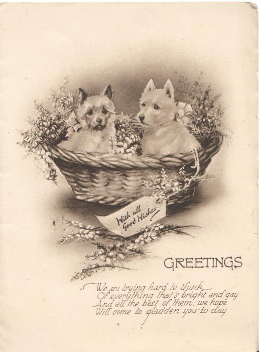 WITH ALL GOOD WISHES GREETINGS, black & white study of 2 scotties in basket with heather, verse